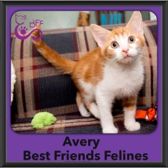 2016-Adopted-Avery