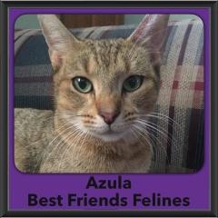 2016-Adopted-Azula