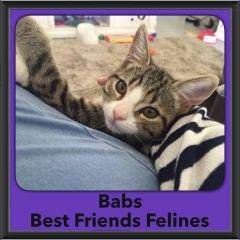 2016-Adopted-Babs