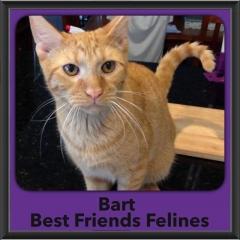2016-Adopted-Bart