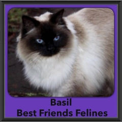 2016-Adopted-Basil
