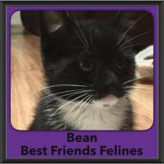 2016-Adopted-Bean