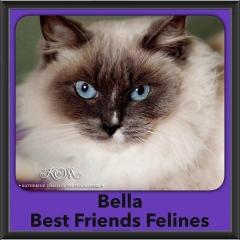 2016-Adopted-Bella