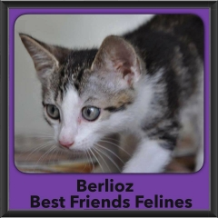 2016-Adopted-Berlioz
