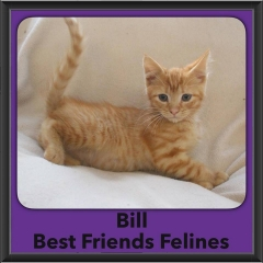 2016-Adopted-Bill
