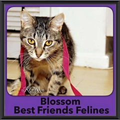 2016-Adopted-Blossom