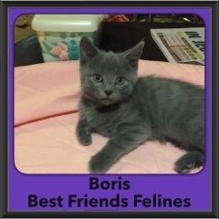 2016-Adopted-Boris