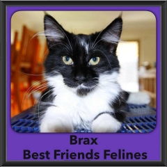 2016-Adopted-Brax