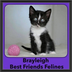 2016-Adopted-Brayleigh