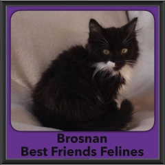 2016-Adopted-Brosnan