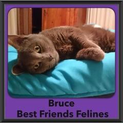 2016-Adopted-Bruce