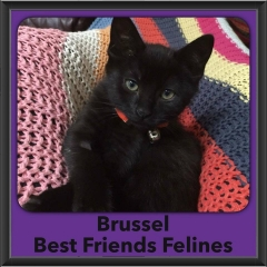 2016-Adopted-Brussel