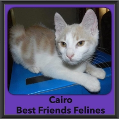 2016-Adopted-Cairo