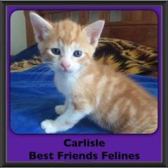 2016-Adopted-Carlisle