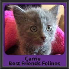 2016-Adopted-Carrie