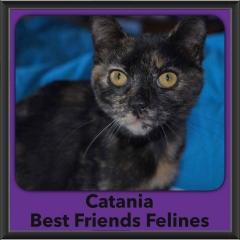 2016-Adopted-Catania