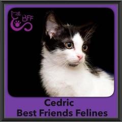2016-Adopted-Cedric