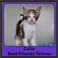2016-Adopted-Celia