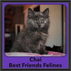 2016-Adopted-Chai