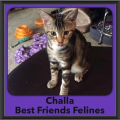 2016-Adopted-Challa