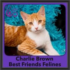 2016-Adopted-Charlie-Brown