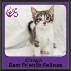 2016-Adopted-Chaya