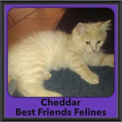 2016-Adopted-Cheddar