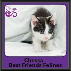 2016-Adopted-Chessa