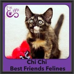 2016-Adopted-Chi-Chi