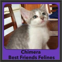 2016-Adopted-Chimera