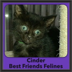 2016-Adopted-Cinder