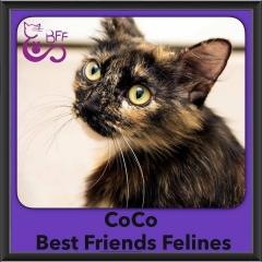 2016-Adopted-Coco