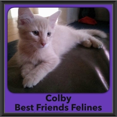2016-Adopted-Colby