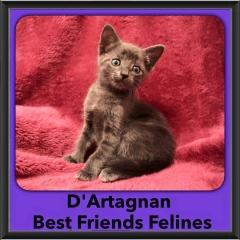 2016-Adopted-DArtagnan