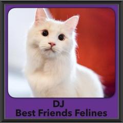 2016-Adopted-DJ