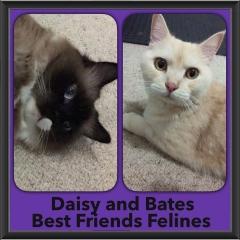 2016-Adopted-Daisy-Bates
