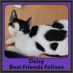 2016-Adopted-Daisy