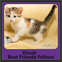 2016-Adopted-Dinah
