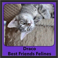 2016-Adopted-Draco