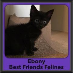 2016-Adopted-Ebony