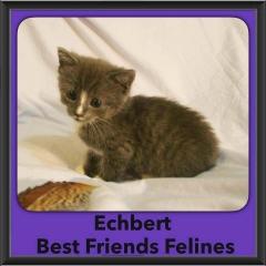 2016-Adopted-Echbert