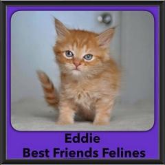 2016-Adopted-Eddie