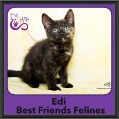 2016-Adopted-Edi