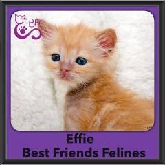 2016-Adopted-Effie
