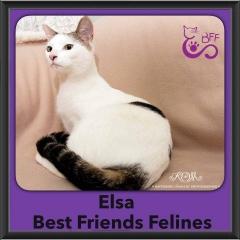 2016-Adopted-Elsa