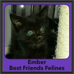 2016-Adopted-Ember