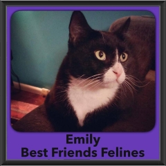 2016-Adopted-Emily-2