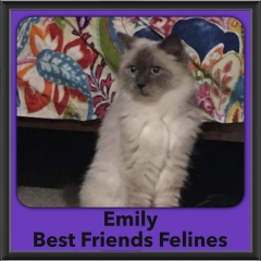 2016-Adopted-Emily