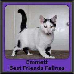 2016-Adopted-Emmett