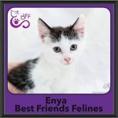 2016-Adopted-Enya